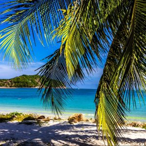 Thailand, Beach with Palm Tree