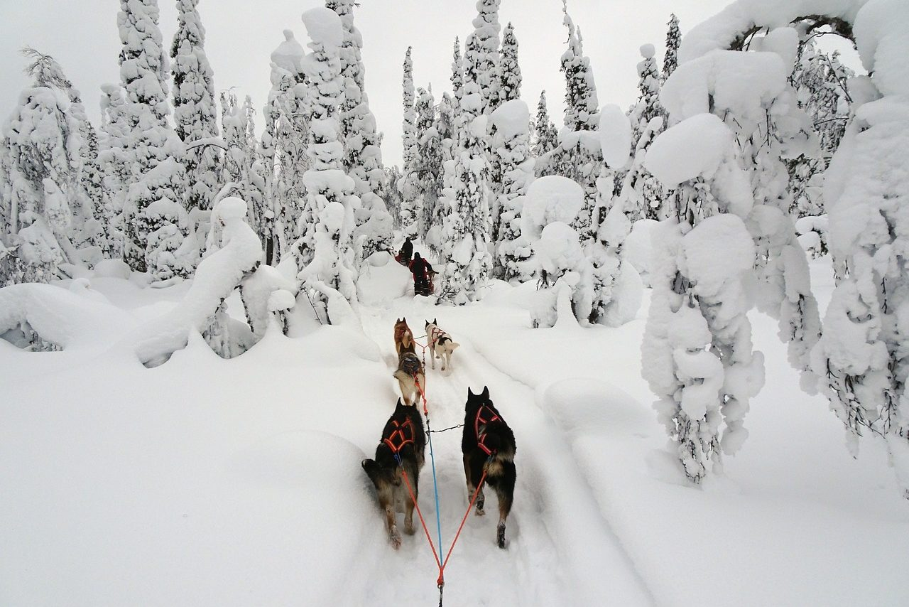 Lapland, Husky, Sleigh, Winter, Snow, Winter Travel, Winter Tour, Winter Holidays, Singles Holidays, Solo Travel, Singles Vacations, Solo Holidays (Image: Matthi07, Pixabay)