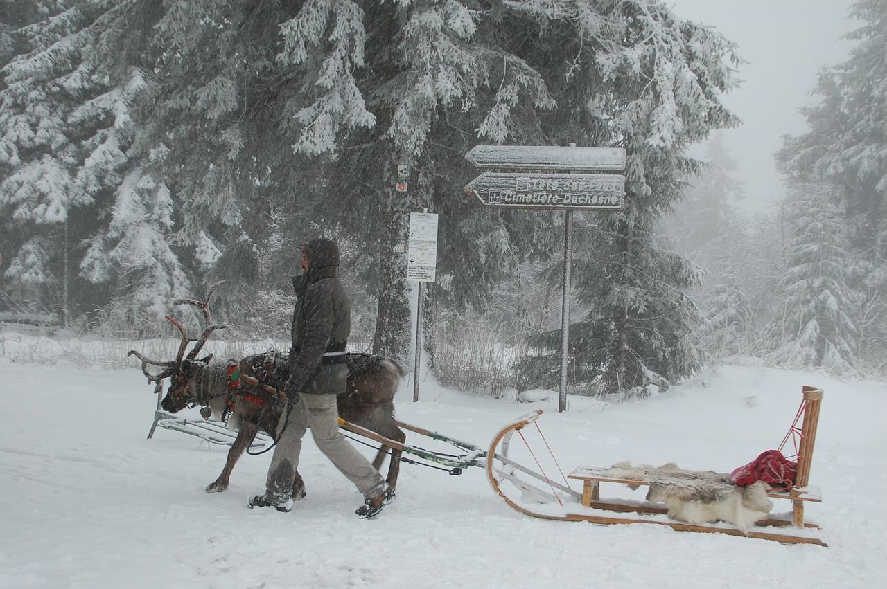 Weihnachten, Schnee, Singlereisen, Rentier