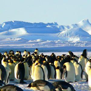 Antarktis, Pinguine, Winter, Schnee, Singlereisen, Solo Travel (Bild: MemoryCatcher, Pixabay)